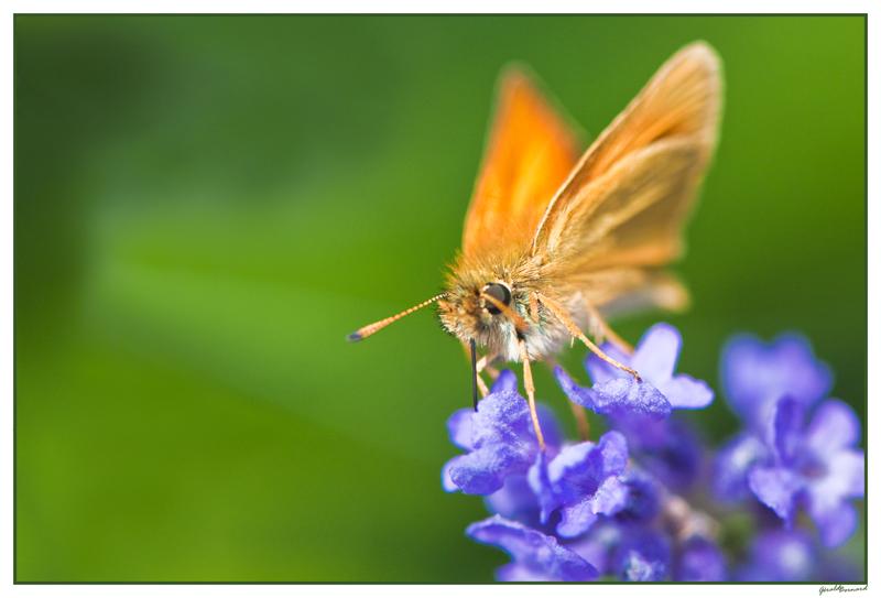 papillon_dsc1532_web