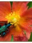 coleoptere_dsc0923_web