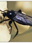 coleoptere_dsc5372_web