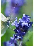 papillon_dsc1307_web
