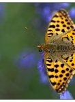 papillon_dsc1560_web