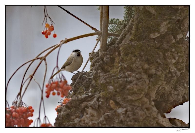 oiseau__DSC32910001