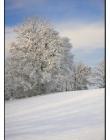 Paysage-de-neige-Culin__DSC23220003