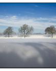 Paysage-de-neige-Culin__DSC24860006