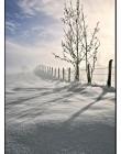 Paysage-de-neige-Culin__DSC24950009